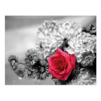 Rote Rose mit Schwarzweiss-Hintergrund Postkarte