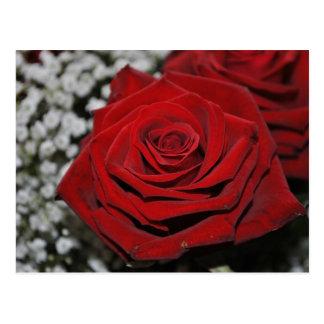 Rote Rose - Postkarte