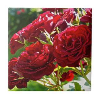 Rote Rosen Kleine Quadratische Fliese