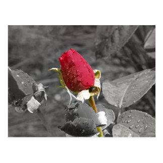 Rote Rosenknospe auf Grau Postkarte