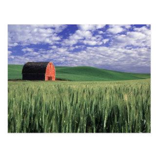 Rote Scheune auf dem Weizen- u. Gerstengebiet in Postkarte