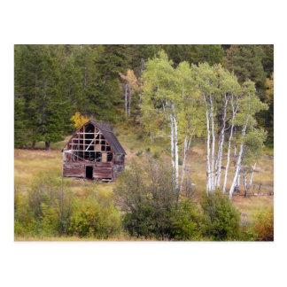 Rote Scheunen-und Birken-Bäume Postkarte
