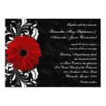Rote, Schwarzweiss-Rollegerbera-Gänseblümchen-Hoch Einladung