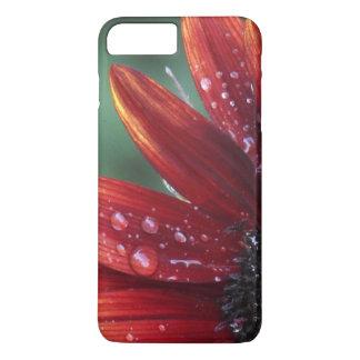 Rote Sonnenblume-Blumenblatt-und Regen-Tropfen iPhone 8 Plus/7 Plus Hülle