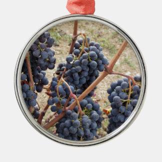 Rote Trauben auf der Rebe. Toskana, Italien Silbernes Ornament