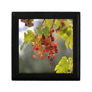Rote Trauben der Nahaufnahme unter Blätter Erinnerungskiste