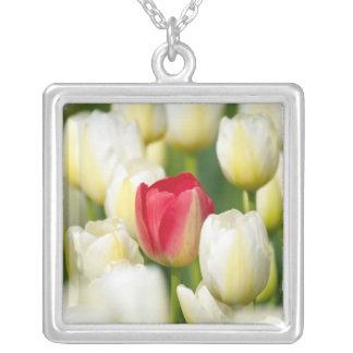 Rote Tulpe auf einem Gebiet der weißen Tulpen Versilberte Kette