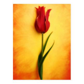 Rote Tulpe u. gemaltes Gelb - kundengerechte Karte Postkarte
