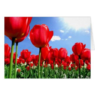 Rote Tulpen im Frühjahr Karte
