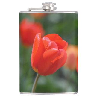 Rote Tulpen im Garten Flachmann