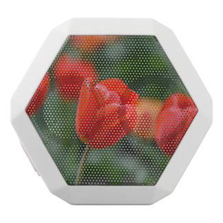 Rote Tulpen im Garten Weiße Bluetooth Lautsprecher