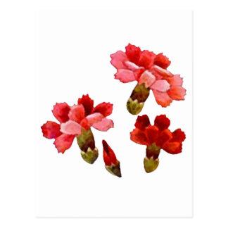 Rote u. rosa gemalt Gartennelken Postkarte