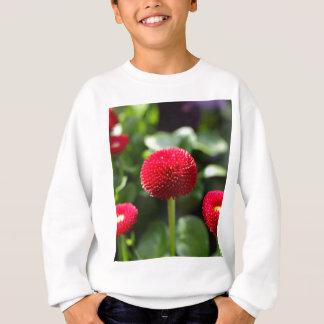 Rote und gefüllte angebaute Gänseblümchen in einem Sweatshirt