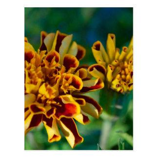 Rote und gelbe Blume (Nahaufnahme) Postkarte