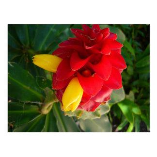 rote und gelbe Blume Postkarte