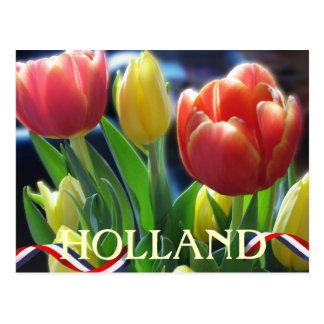 Rote und gelbe Frühlings-Tulpe-Holland-Postkarte Postkarte