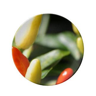 Rote und gelbe Paprika-Pflanze Teller