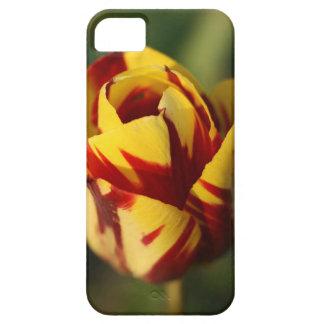 Rote und gelbe Tulpe-Blume iPhone 5 Cover