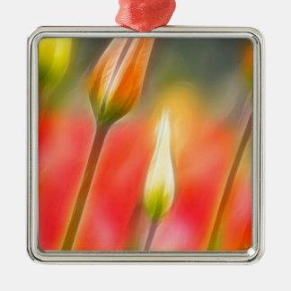Rote und gelbe Tulpe-Skizze Quadratisches Silberfarbenes Ornament