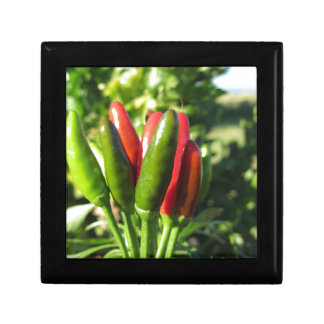 Rote und grüne Paprikaschoten, die an der Pflanze Erinnerungskiste