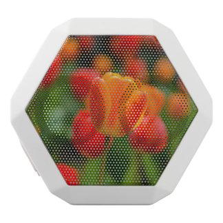 Rote und orange Tulpen im Garten Weiße Bluetooth Lautsprecher