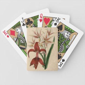 Rote und weiße Amaryllis-Blume Bicycle Spielkarten