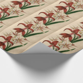 Rote und weiße Amaryllis-Blume Geschenkpapier
