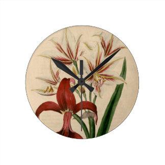 Rote und weiße Amaryllis-Blume Runde Wanduhr