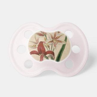 Rote und weiße Amaryllis-Blume Schnuller
