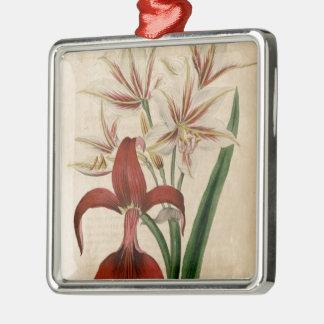 Rote und weiße Amaryllis-Blume Silbernes Ornament