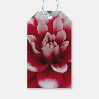 Rote und weiße Dahlie (Dahlie x hortensis) Geschenkanhänger