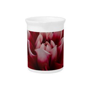 Rote und weiße Dahlie (Dahlie x hortensis) Krug