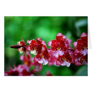 Rote und weiße Dendrobium-Orchideen-Karte Karte