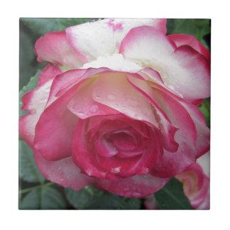 Rote und weiße Rosen-Blumen mit Wassertröpfchen Fliese