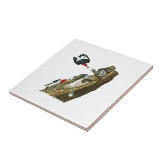 Rote vorangegangene Vögel Amerika Specht-Johns Keramikfliese
