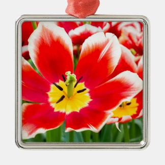 Rote weiße Tulpe auf dem Gebiet der Tulpen Quadratisches Silberfarbenes Ornament