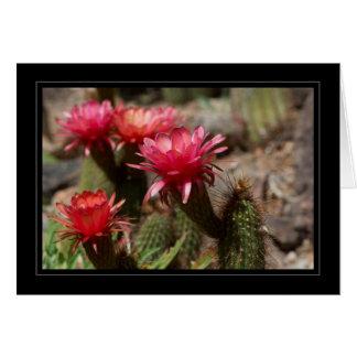 Rote Wüsten-Kaktus-Fackel-Blumen-Schwarz-Grenze Karte