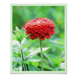 Rote Zinnia-Blume Poster