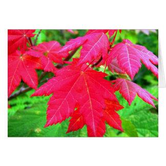 Roter Ahorn-Blätter Karte