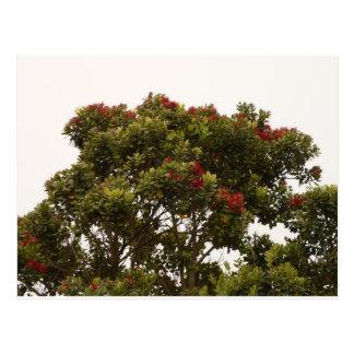 roter Baum in Kalifornien Postkarte