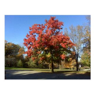 Roter Baum Postkarte