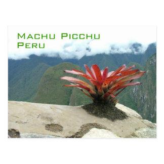 Roter Busch, Machu Picchu, Peru Postkarte
