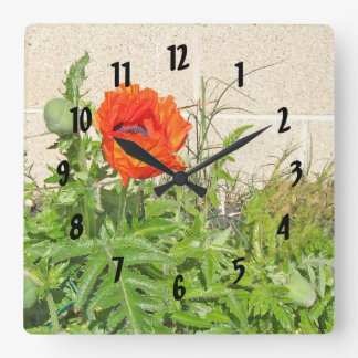 Roter Carmen-Mohnblumen-Glanz im Garten Quadratische Wanduhr