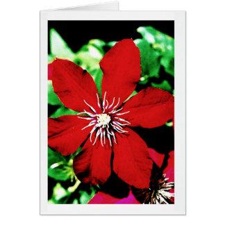 Roter Clematis-kletternde Blumen Karte