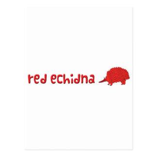 Roter Echidna Postkarte