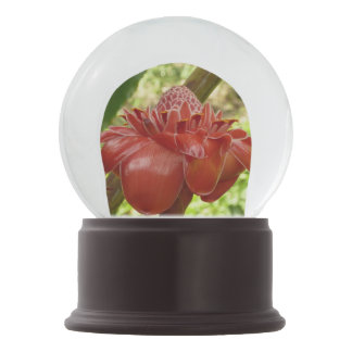 Roter Fackel-Ingwer-tropische Blumen-Fotografie Schneekugel