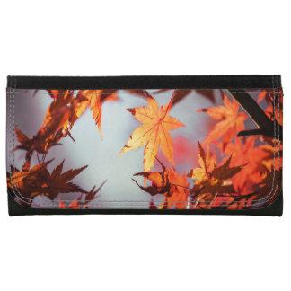 Roter Fall-Herbst verlässt Ahorn-Baum