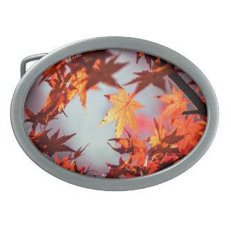 Roter Fall-Herbst verlässt Ahorn-Baum Ovale Gürtelschnallen