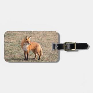 Roter Fox auf einem Gebiet Kofferanhänger