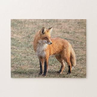 Roter Fox auf einem Gebiet Puzzle